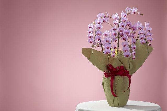 お祝い花イメージ