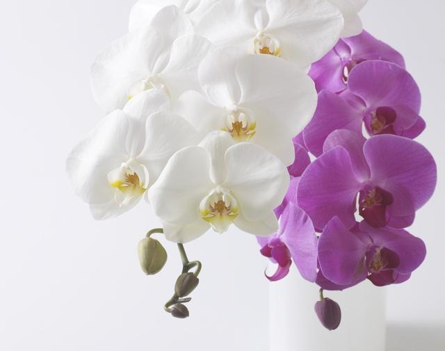 喜寿祝いのお花イメージ